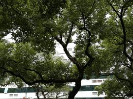 """福州城区大树上试种兰花 主干道""""颜值""""将更高"""