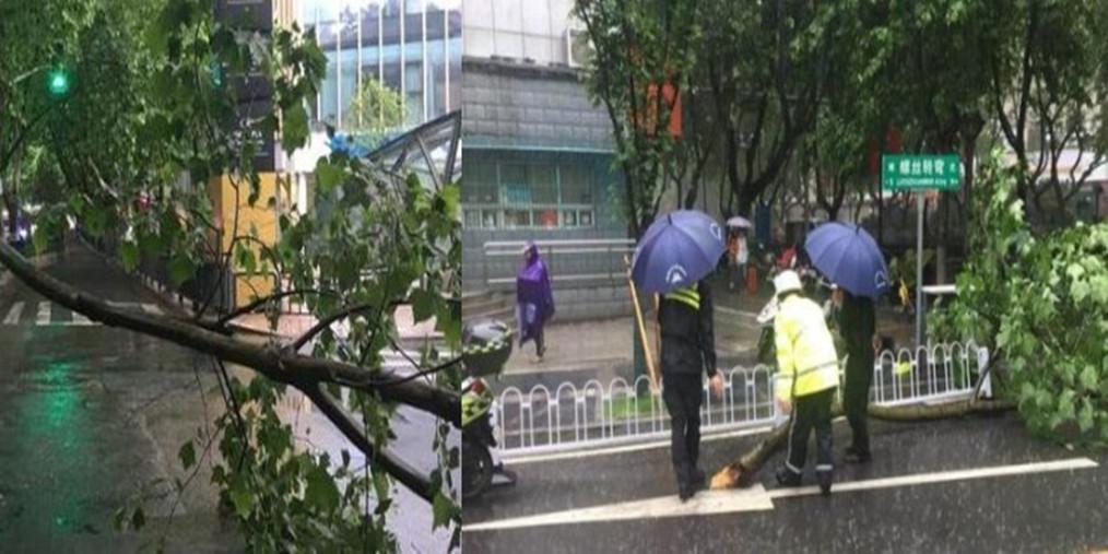 树枝雨中断落险砸路人 众人联手排险