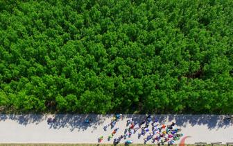 民权林场:平原上的林海 黄沙上的绿色远征