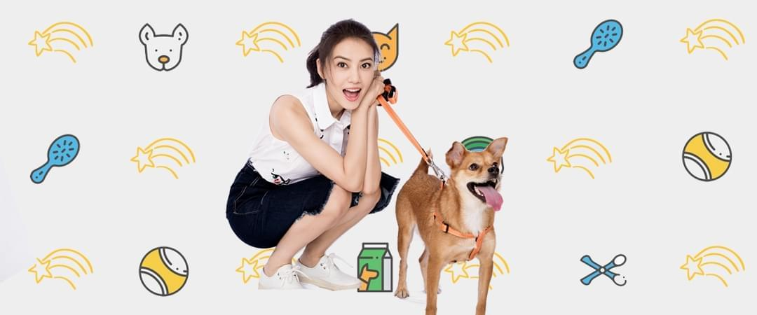 我爱中华田园犬38城市专场领养日