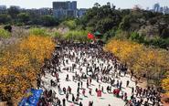超10万人涌入华南农大赏花