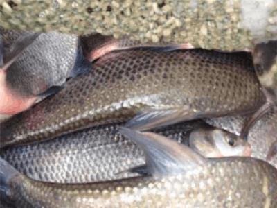 南海两餐馆边鱼鲗鱼检出含有禁售的兽药