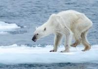 新研究:人类改造气候需持续进行,一停就会引发