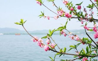 3月赏花之旅:这里的花花世界让游人流连忘返