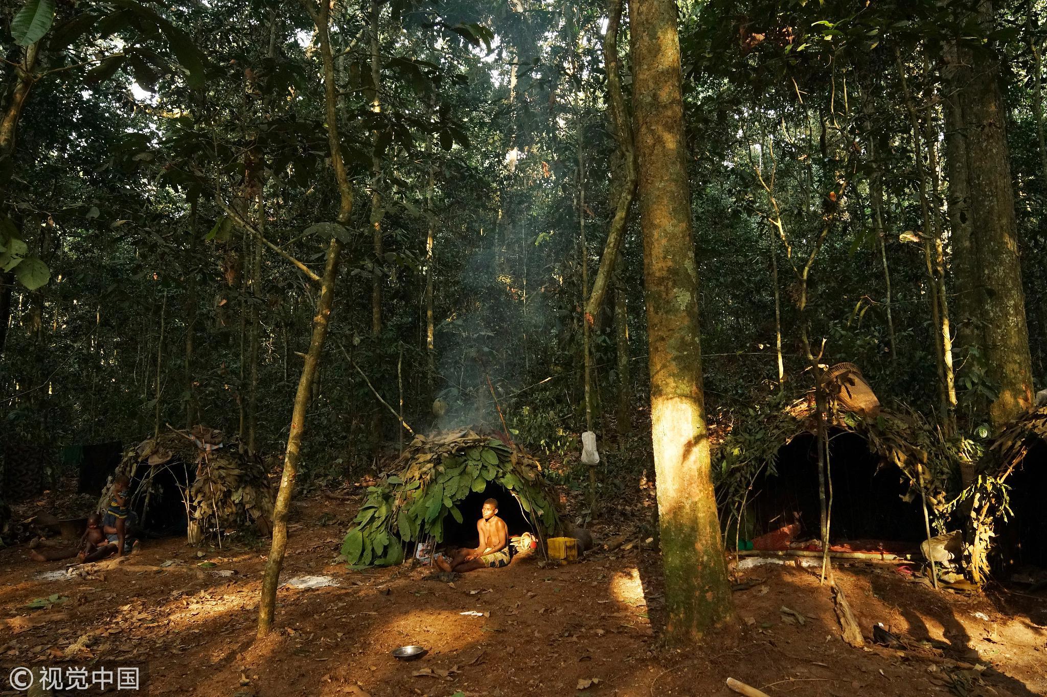 中非共和国森林中的狩猎采集部落。他们虽然游离在主流社会之外,大多数人口规模也在150人左右 / 视觉中国