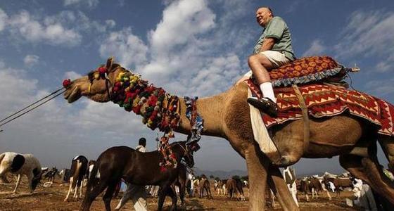 揭世界最大骆驼市场 聚集上万头骆驼