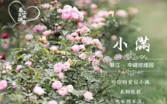 小满 | 綦江竟然还有这么美的玫瑰庄园 等你去发现!