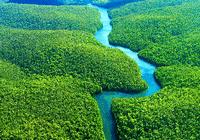 全球变暖加剧,植物吸收二氧化碳能力遭到削弱