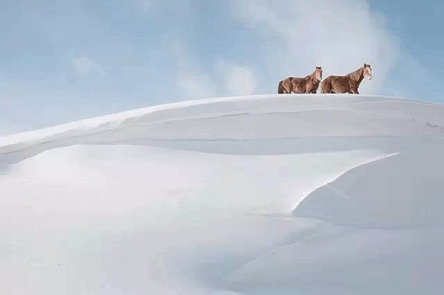 雪中的新疆马 美的不敢看!一组照片惊艳世界