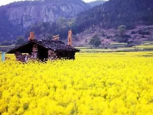 浙8个地方随手一拍就是绝美春日大片