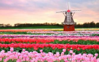 """鲜花被拍卖的阿姆斯特丹 一座""""花卉王国"""""""