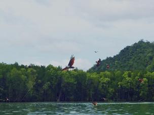 生态红树林,喂鹰抓魔鬼鱼观猴