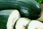 秋季多吃这两种瓜 防止发胖降血脂
