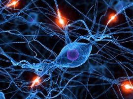 英国论文报告称:脑活动模式可实时判断是否在做