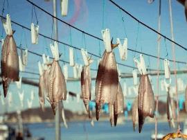 湛江这个镇的海鲜上天啦!不仅生猛而且便宜