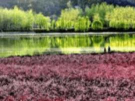 山西芮城 圣天湖景区举办健康跑踏春赏花活动