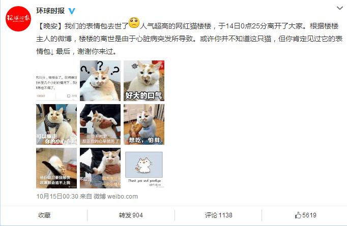 这只猫去世,让近百万网友每天以泪洗面