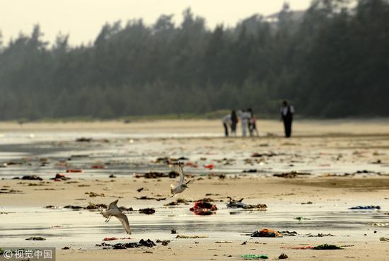 2010年10月30日,海南文昌,两只海鸟掠过布满垃圾的海/视觉中国
