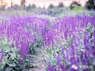 看镜头:发现感受紫色的爱情草