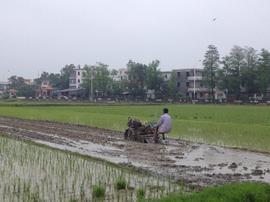 台山采取水稻免耕同步施肥机插秧模式 平均增产17.7%