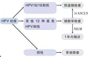 健康公开课:高达4成女性感染的HPV 有多少会变宫颈癌呢