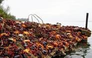 巴西大批螃蟹聚集海滩产卵