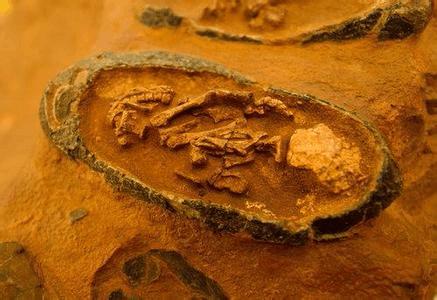 9000万年前恐龙宝宝化石被确定为新物种