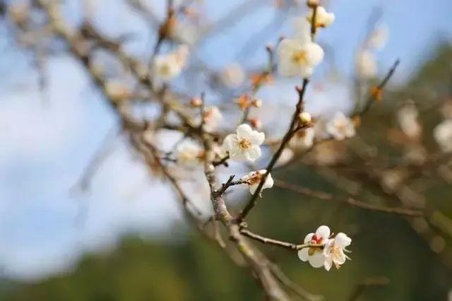 错过等一年!惠州这里三千多亩花海开花了!