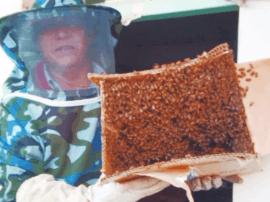 舟山市最美新居民 南阳籍义工灭蜂队专捅马蜂窝