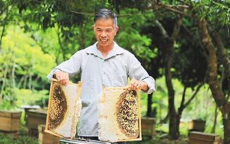 琼中全力推广发展养蜂产业 带动贫困户脱贫致富
