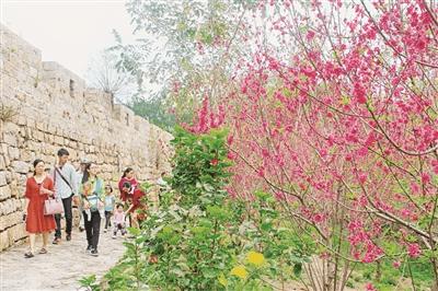 东山:铜山古城桃花林里花开争艳吸引游客
