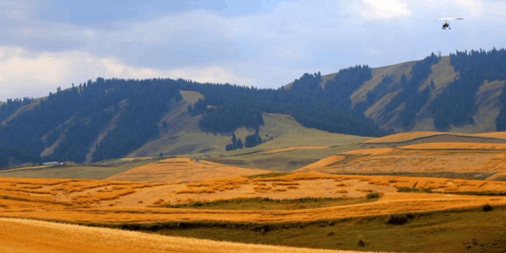 新疆江布拉克万亩旱田开镰收割 秋收美景醉游人