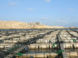 考察手记:气候变化影响下的平潭近海养殖
