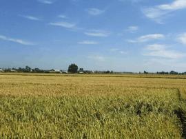 """省农科院坚持做强""""三大体系"""" 打造高科技农业"""