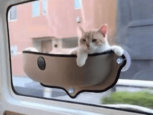 车载宠物吊床助喵星人欣赏旅途风景