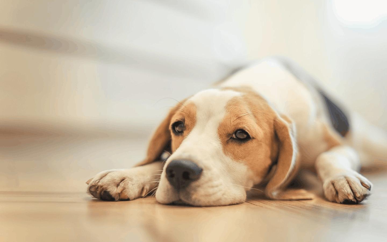 养狗需办证 28个烈性犬品种禁养