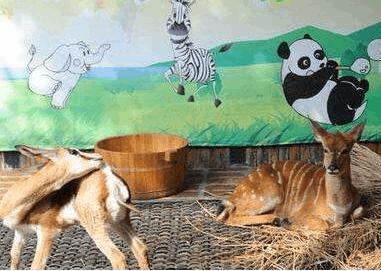 室外天寒地冻 中山公园的动物们如何过冬?