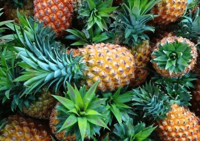 PPAP 唱得这么溜,但你分得清菠萝和凤梨吗
