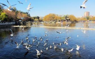 昆明翠湖片区提升工程拟2020年完成