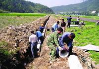 东北水稻导致地下水超采? 专家呼吁需高度重视