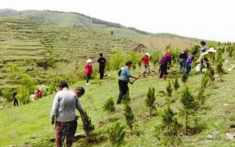 争创国家森林城市 本市今年计划造林66万亩