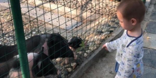 谢杏芳晒萌娃游动物园照 网友:林丹呢?