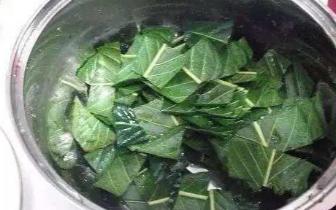 感冒咳嗽 拿几片叶子煮水喝 第二天就好了!
