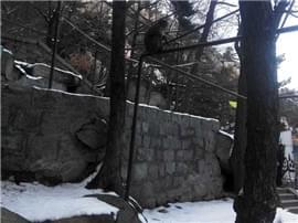 """雪后崂山银装素裹静美妖娆 引来""""大圣""""赏雪景"""