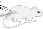 """一种癌症""""疫苗""""能治愈97%的老鼠肿瘤"""