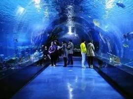 鄂尔多斯海洋馆来了!预计10月与游客见面!