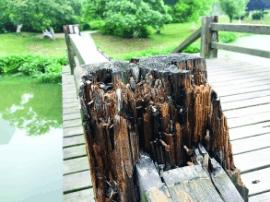 南昌艾溪湖湿地公园栈道严重破损 游客赏景心慌