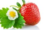 """朋友圈谣言盘点:草莓是""""最脏""""蔬果"""