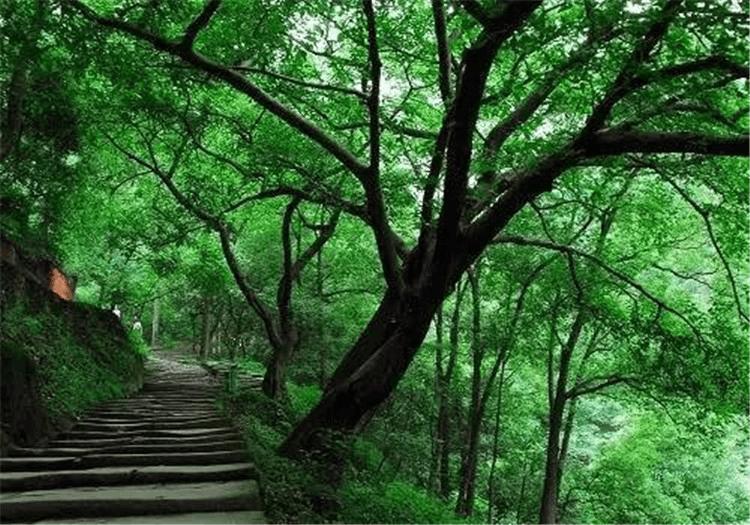 黄葛树、金银花、崖柏……带上这张地图看遍重庆的特色