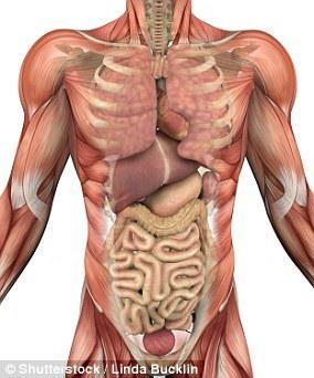 科学家发现人体新器官:遍布全身,充当内置减震器